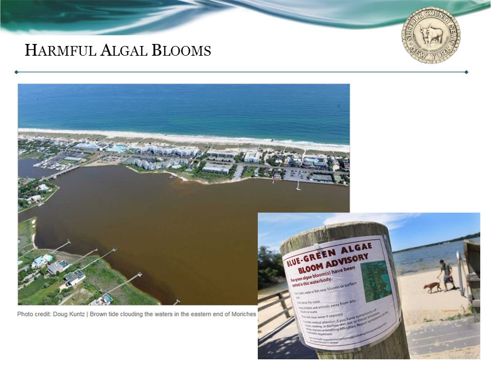 Harmful Algal Blooms