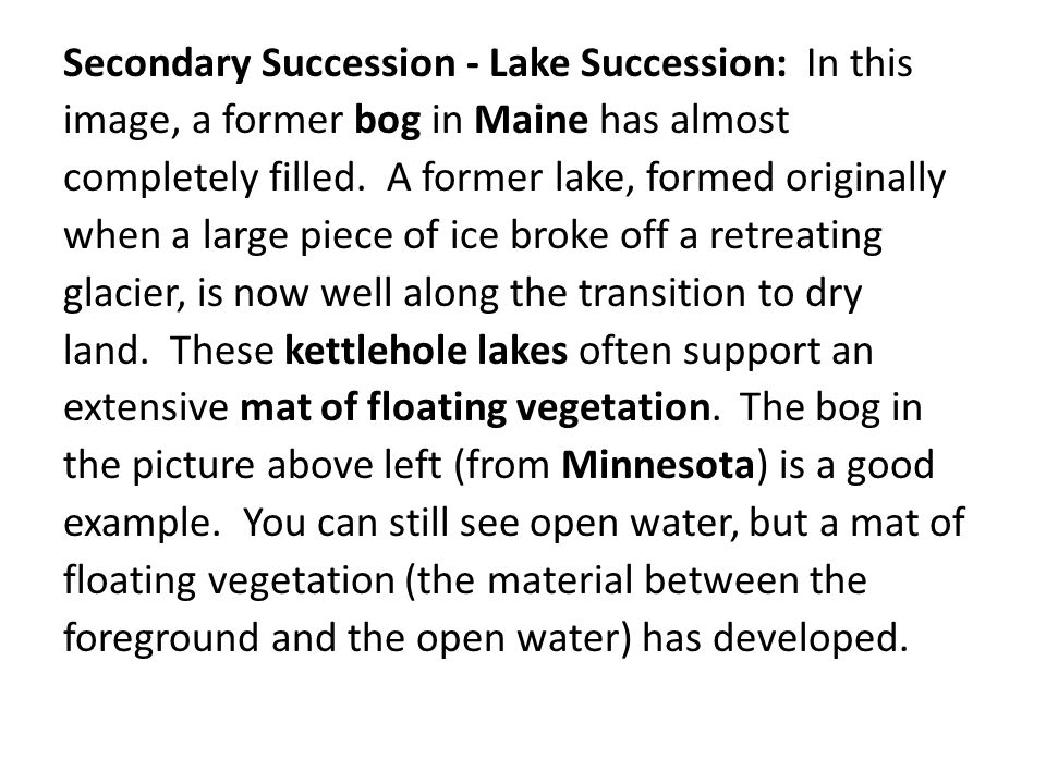 Secondary Succession - Lake Succession: In this image, a former bog in Maine has almost completely filled.