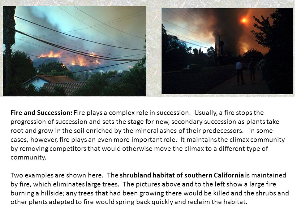 Fire and Succession: Fire plays a complex role in succession