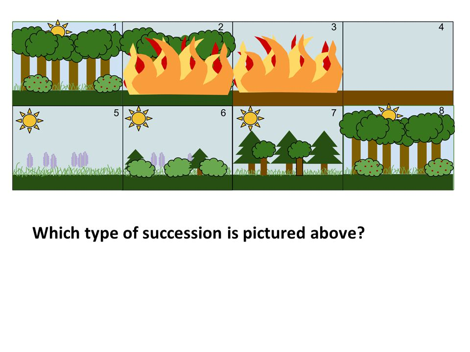 Which type of succession is pictured above