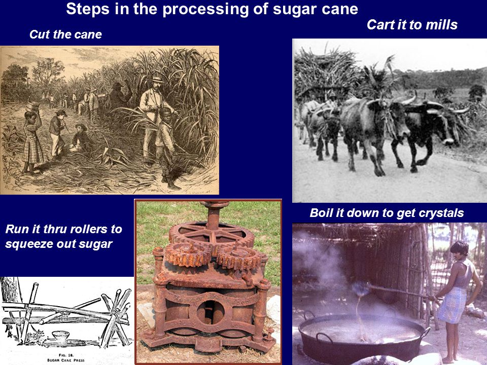 Steps in the processing of sugar cane