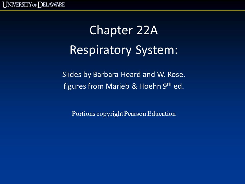 Chapter 22A Respiratory System: Slides by Barbara Heard and W. Rose.