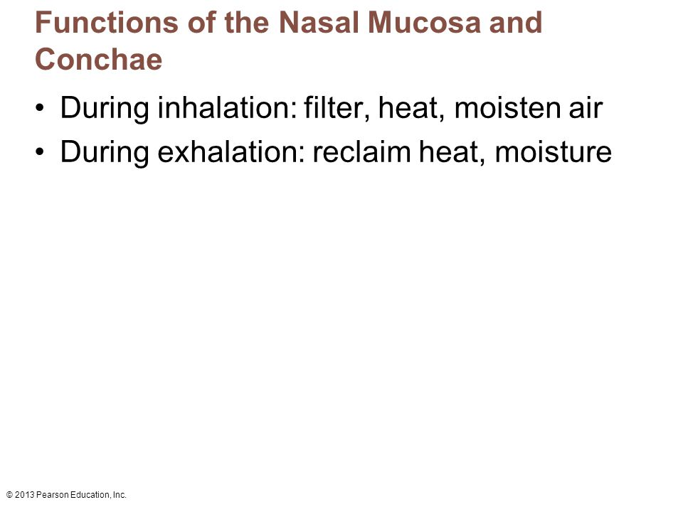 Functions of the Nasal Mucosa and Conchae