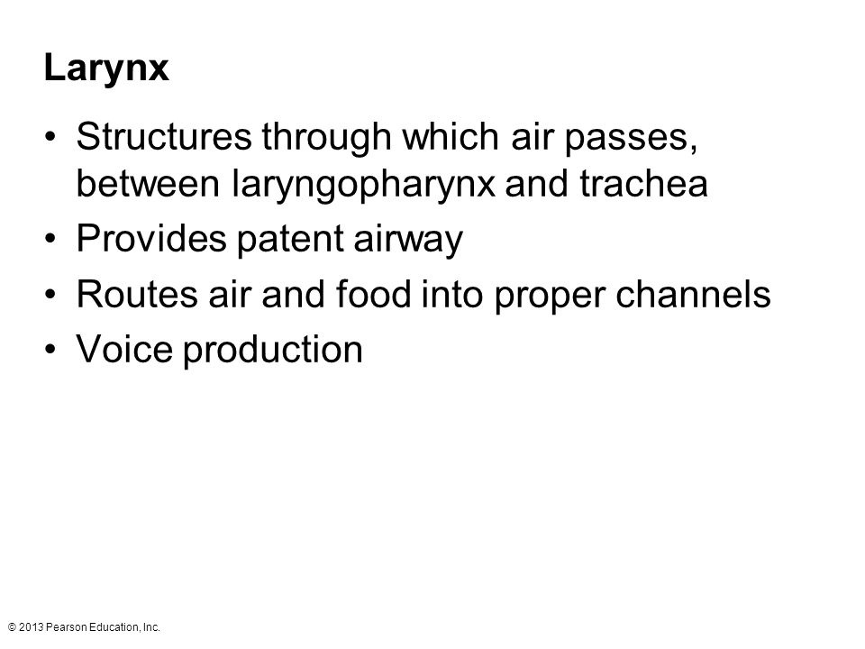 Provides patent airway Routes air and food into proper channels