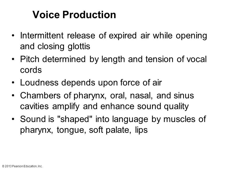 Voice Production Intermittent release of expired air while opening and closing glottis. Pitch determined by length and tension of vocal cords.