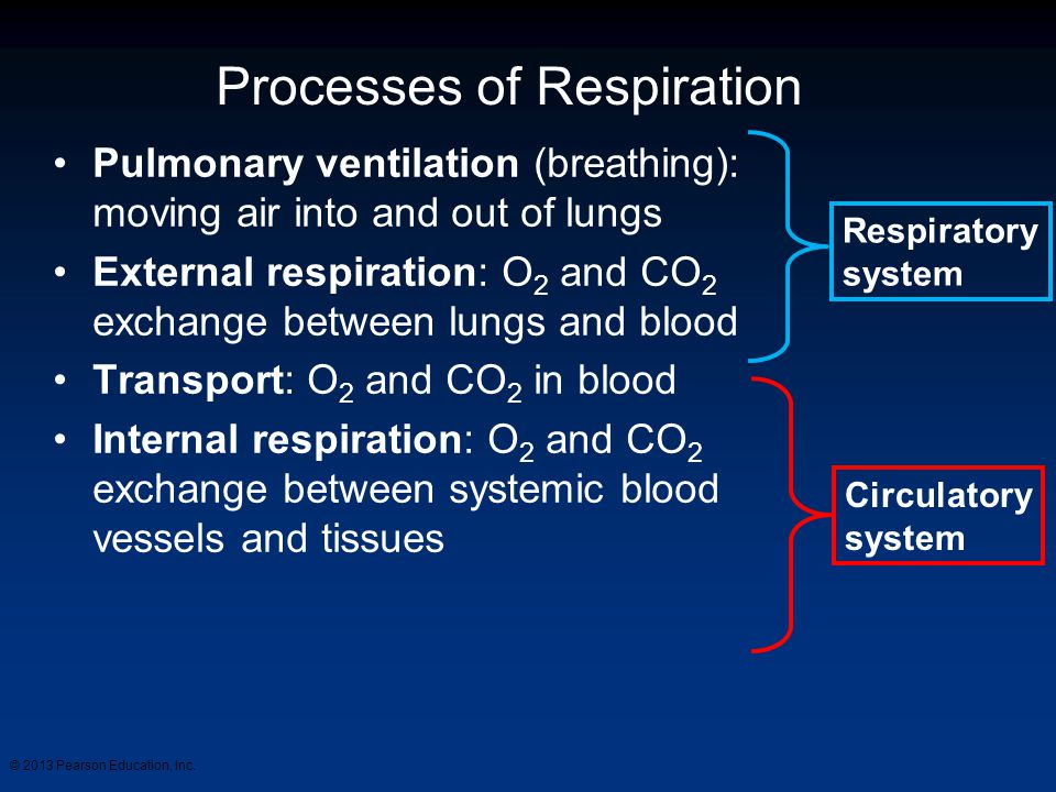Processes of Respiration