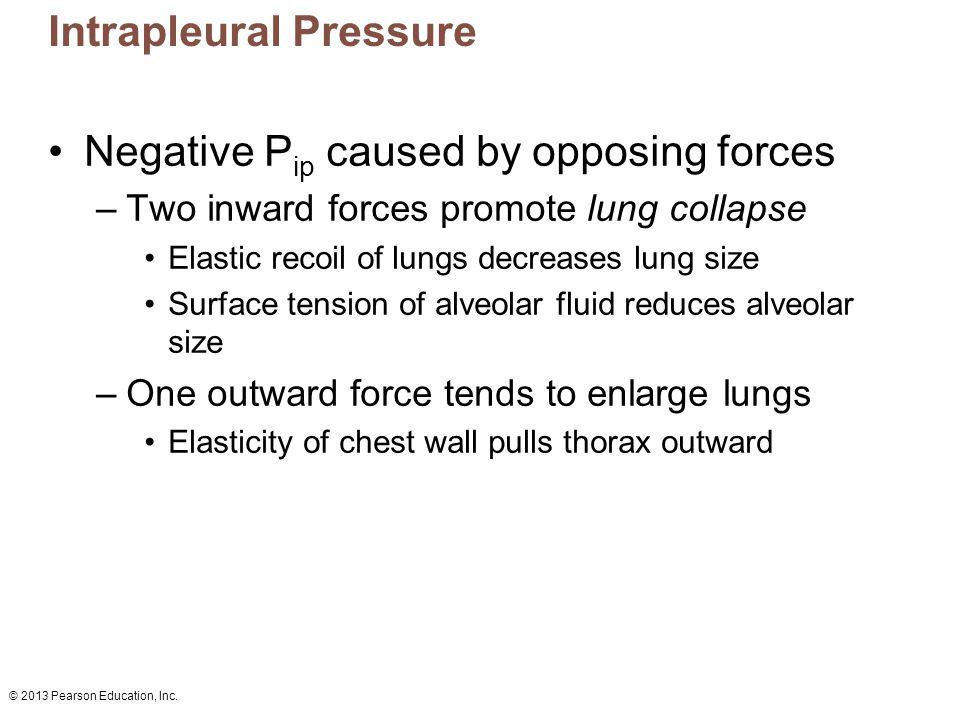 Intrapleural Pressure