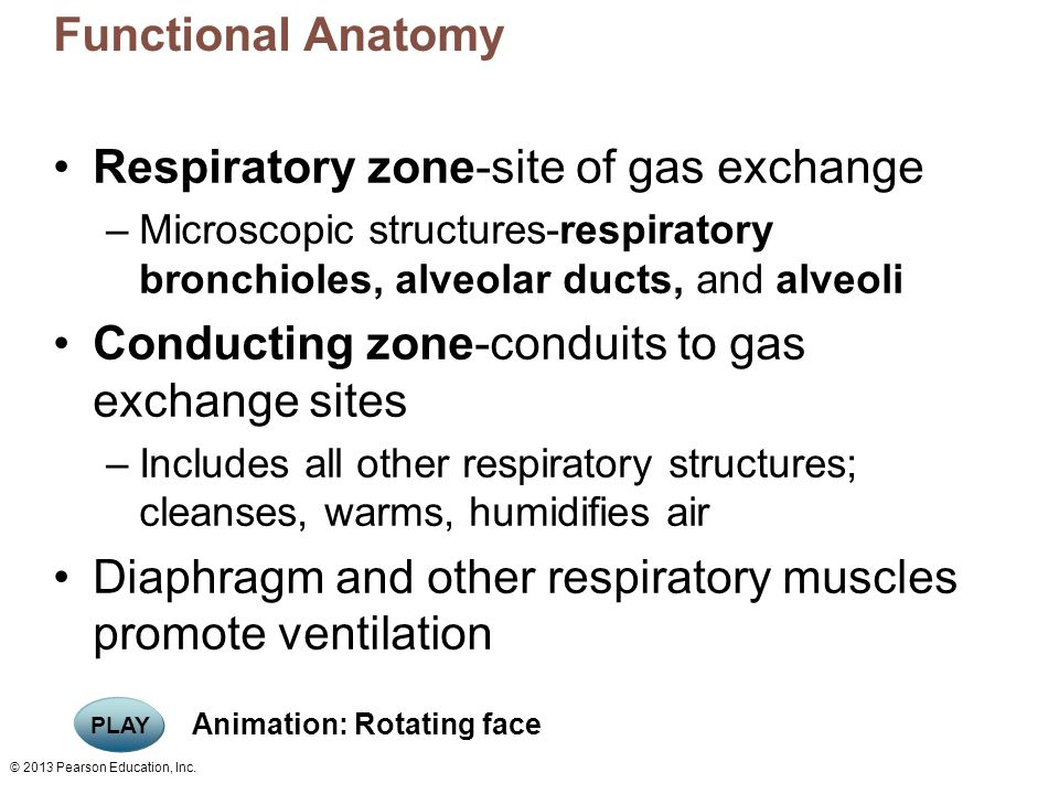 Respiratory zone-site of gas exchange