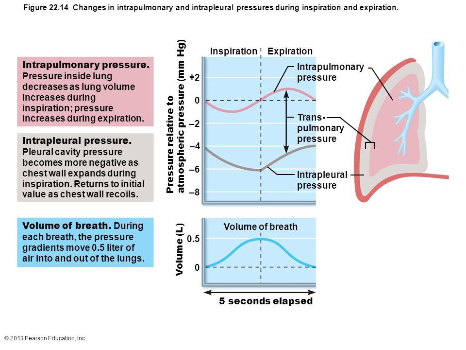 Intrapulmonary pressure. Pressure inside lung