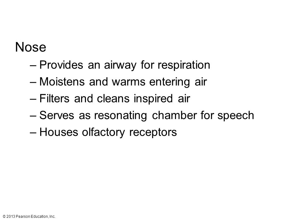 Nose Provides an airway for respiration
