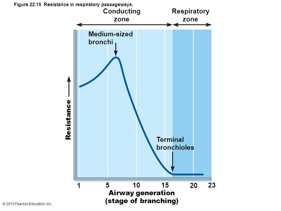 Figure 22.15 Resistance in respiratory passageways.