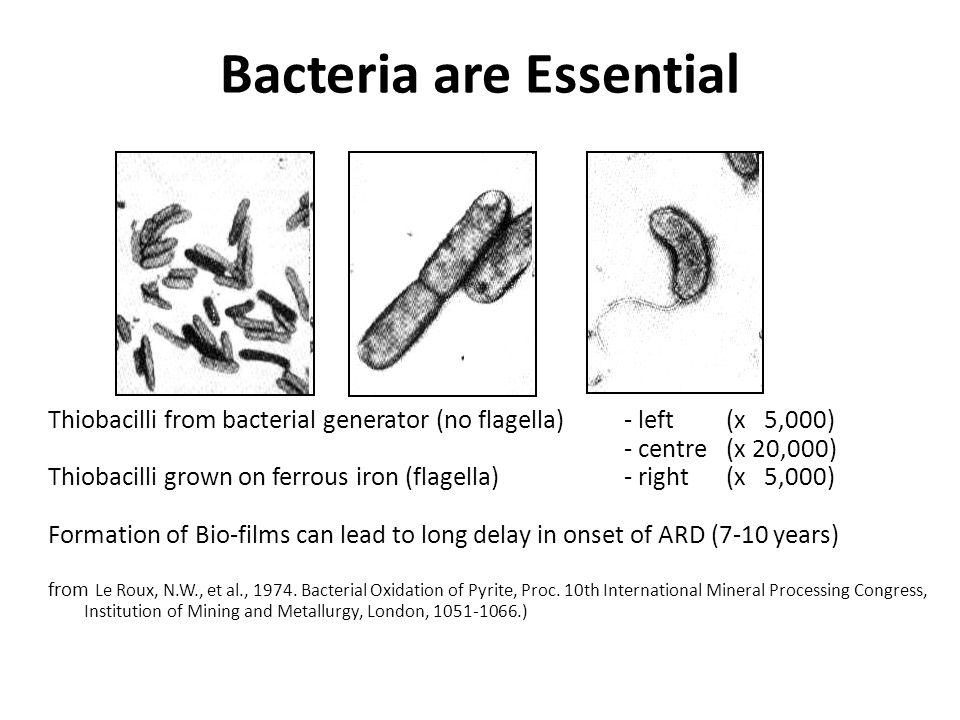 Bacteria are Essential
