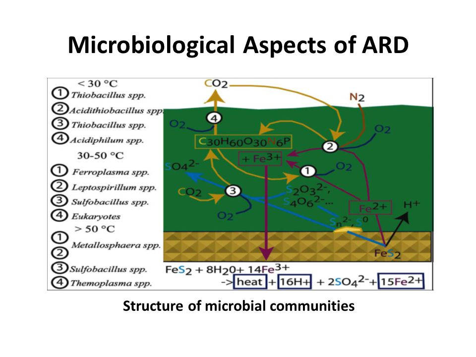 Microbiological Aspects of ARD
