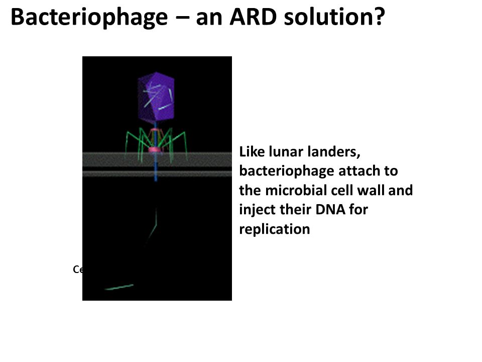 Bacteriophage – an ARD solution