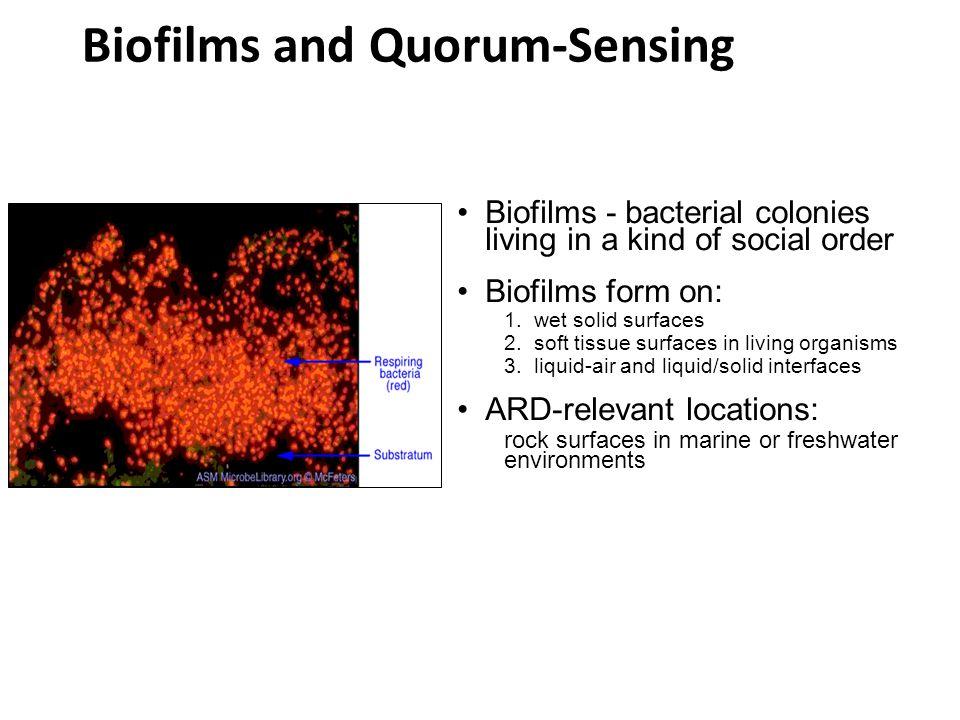Biofilms and Quorum-Sensing