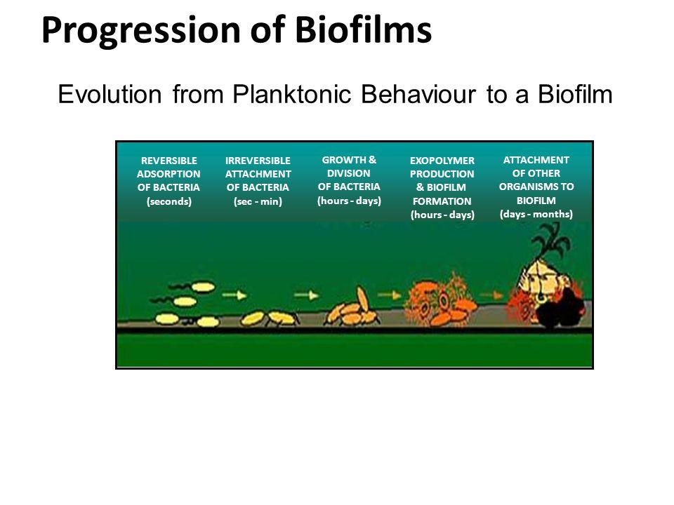 Progression of Biofilms