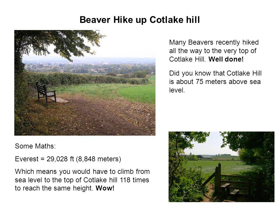 Beaver Hike up Cotlake hill