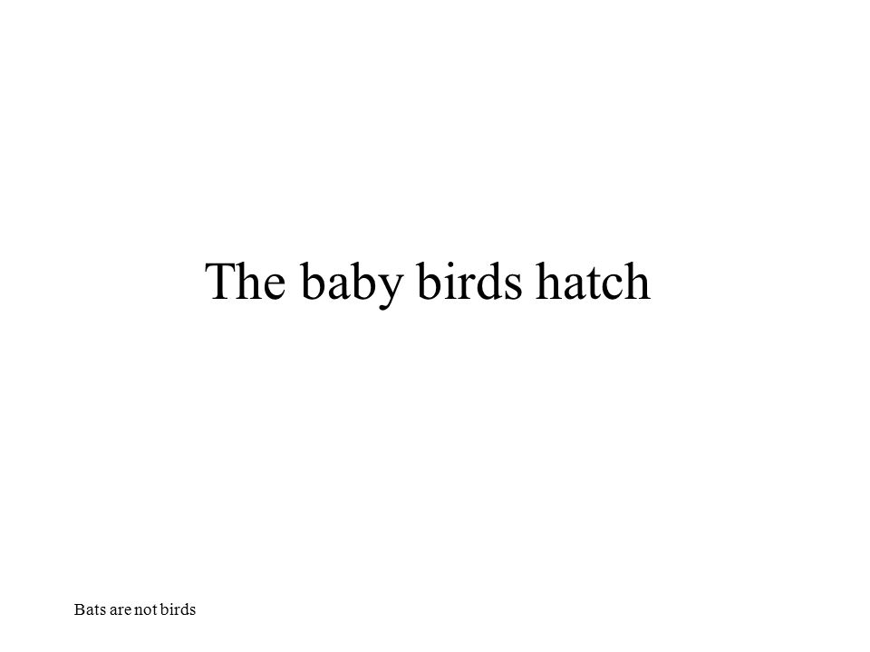 The baby birds hatch Bats are not birds