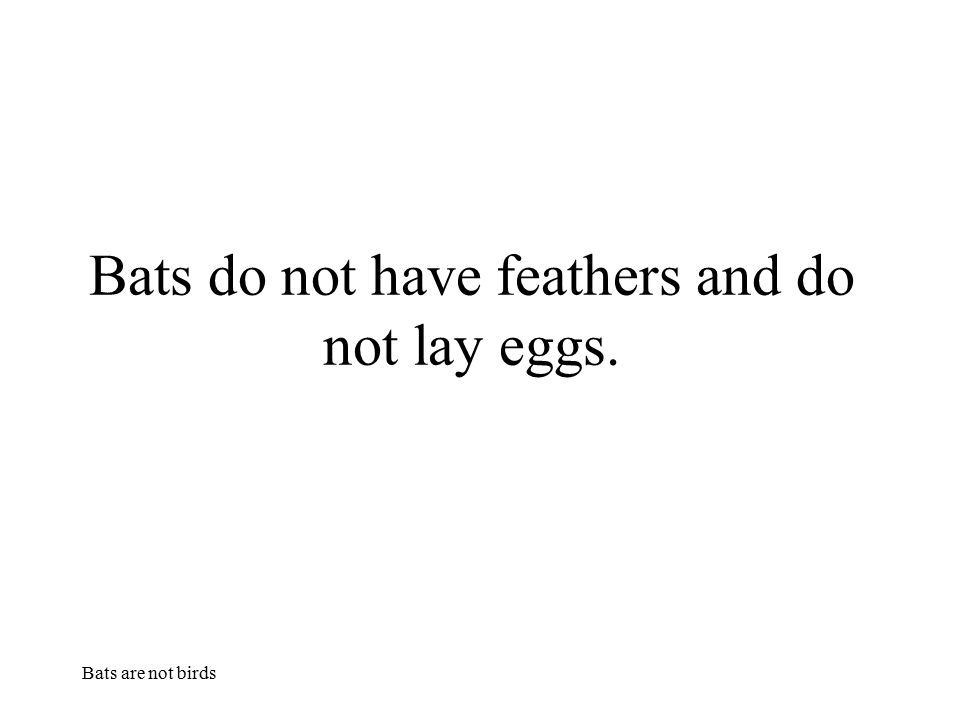 Bats do not have feathers and do not lay eggs.