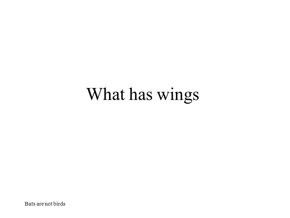 What has wings Bats are not birds