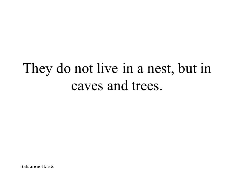 They do not live in a nest, but in caves and trees.