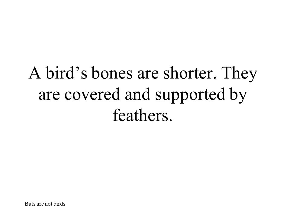A bird's bones are shorter. They are covered and supported by feathers.