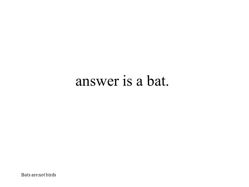 answer is a bat. Bats are not birds