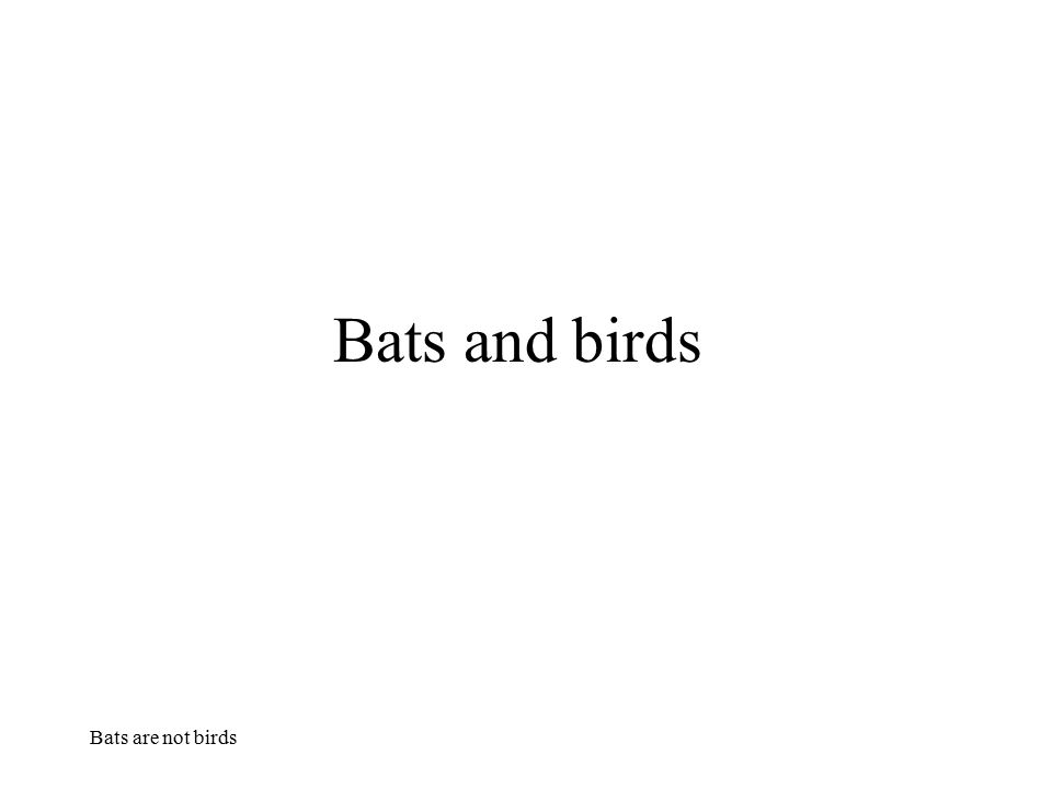 Bats and birds Bats are not birds