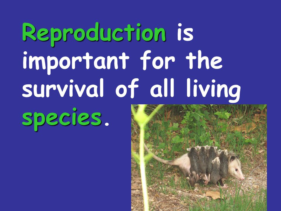 Reproduction is important for the survival of all living species.