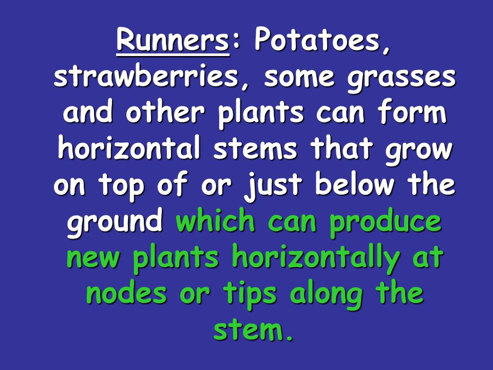 Runners: Potatoes, strawberries, some grasses and other plants can form horizontal stems that grow on top of or just below the ground which can produce new plants horizontally at nodes or tips along the stem.
