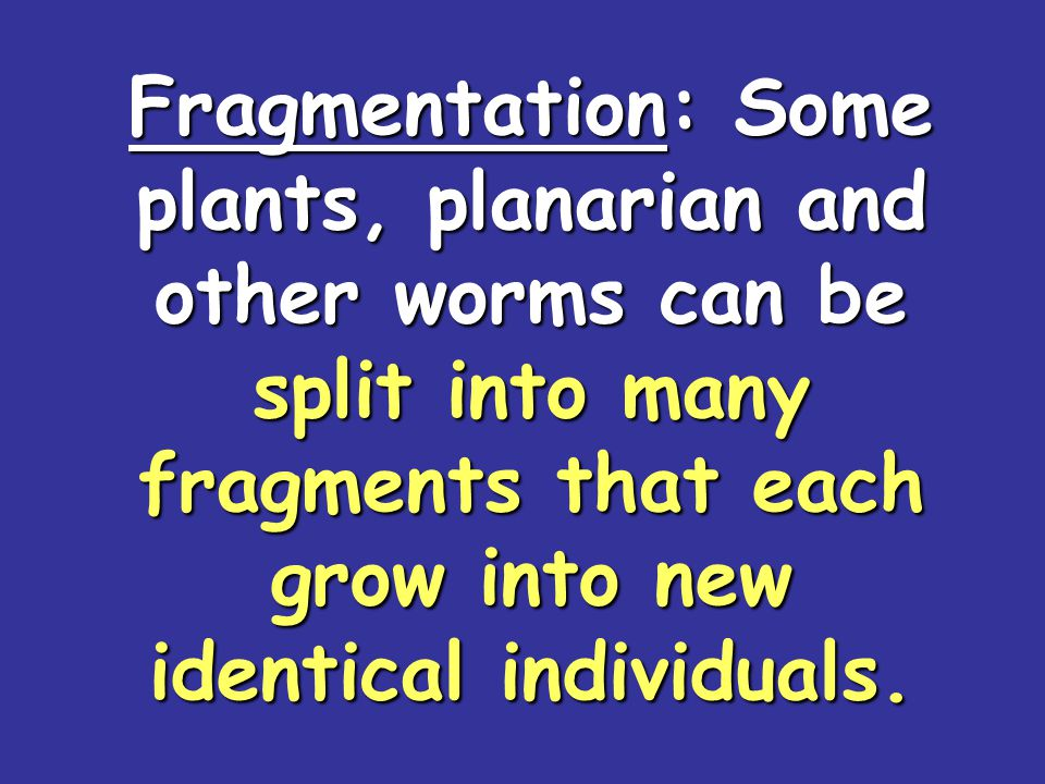 Fragmentation: Some plants, planarian and other worms can be split into many fragments that each grow into new identical individuals.