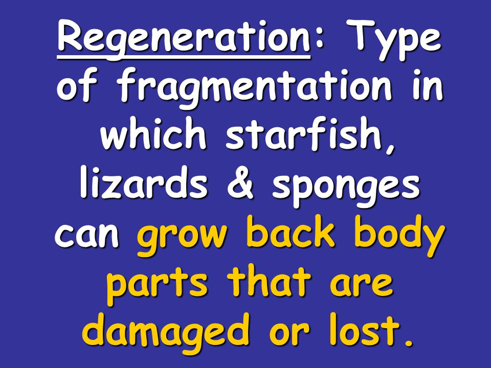 Regeneration: Type of fragmentation in which starfish, lizards & sponges can grow back body parts that are damaged or lost.