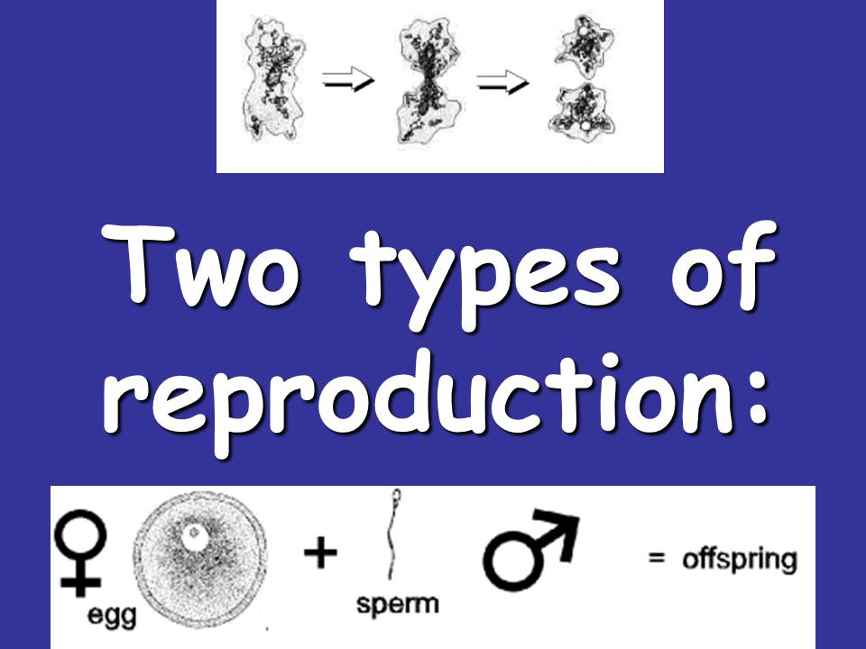 Two types of asexual reproduction photo 56