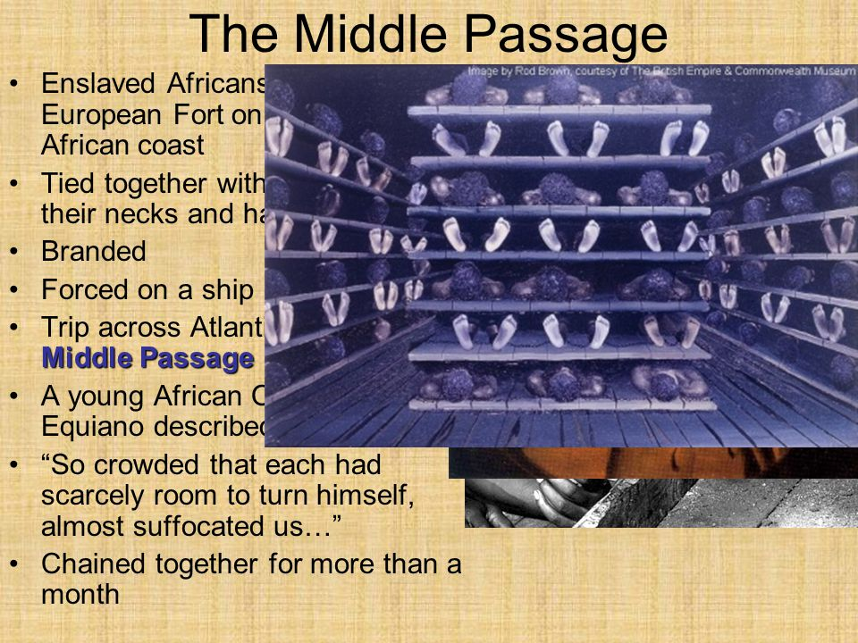 The Middle Passage Enslaved Africans first went to a European Fort on the West African coast. Tied together with ropes around their necks and hands.