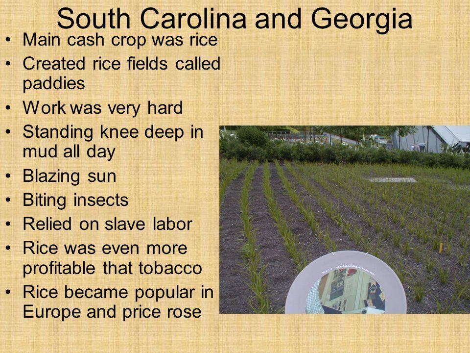 South Carolina and Georgia
