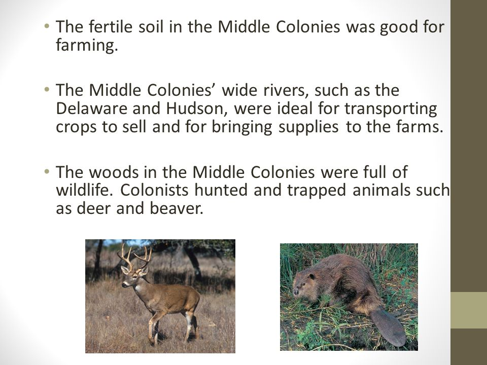 The fertile soil in the Middle Colonies was good for farming.