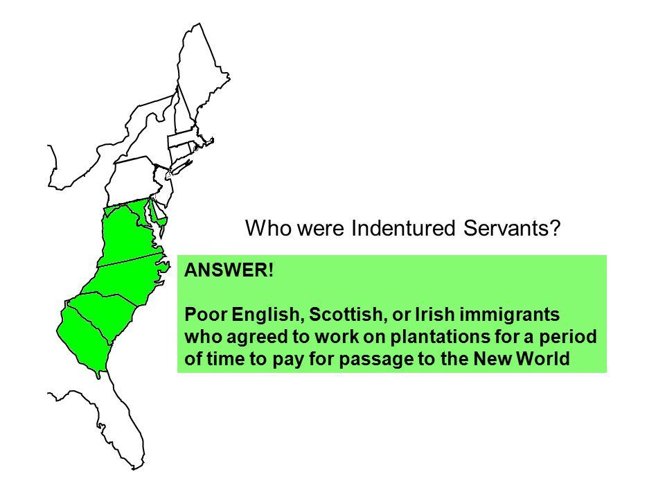 Who were Indentured Servants