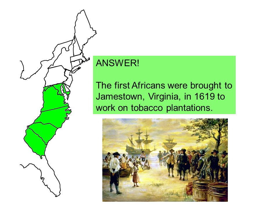 ANSWER. The first Africans were brought to. Jamestown, Virginia, in 1619 to.