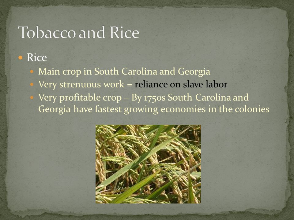 Tobacco and Rice Rice Main crop in South Carolina and Georgia