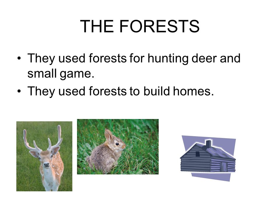THE FORESTS They used forests for hunting deer and small game.