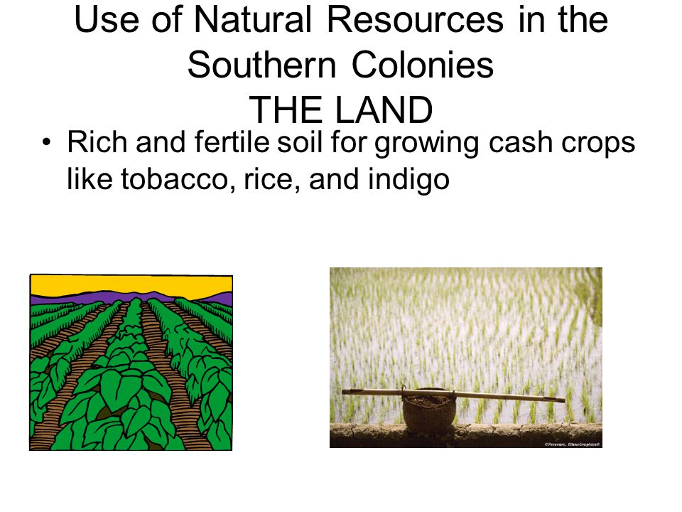 Use of Natural Resources in the Southern Colonies THE LAND