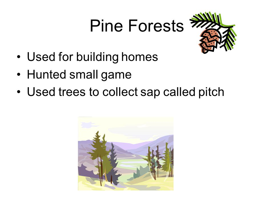 Pine Forests Used for building homes Hunted small game