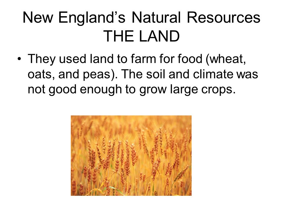 New England's Natural Resources THE LAND