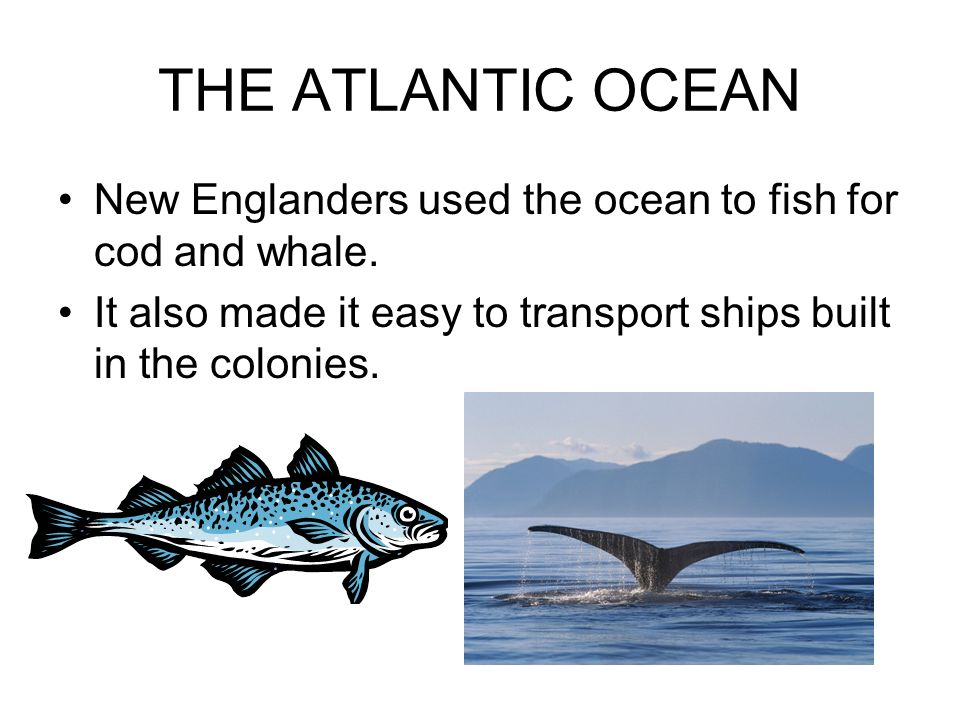 THE ATLANTIC OCEAN New Englanders used the ocean to fish for cod and whale.
