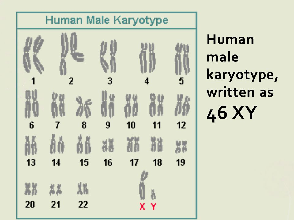 Human male karyotype, written as 46 XY