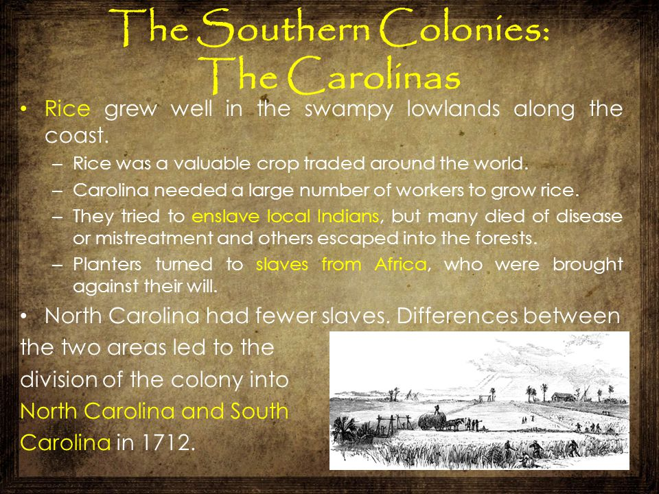 The Southern Colonies: The Carolinas