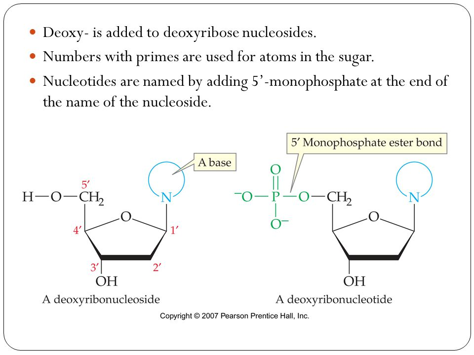 Deoxy- is added to deoxyribose nucleosides.