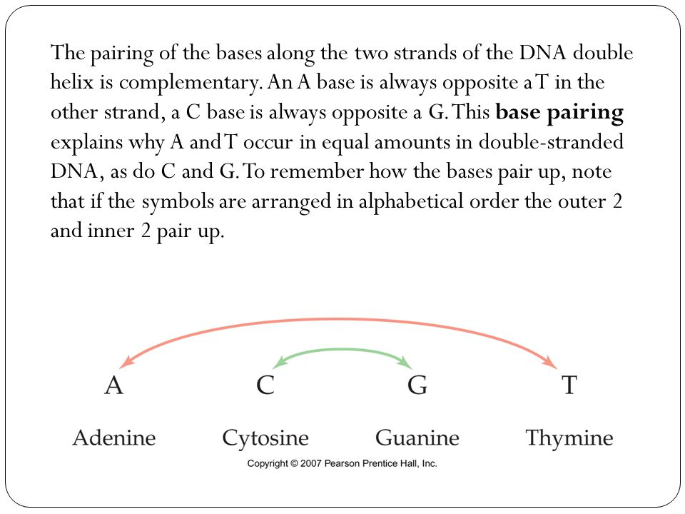 The pairing of the bases along the two strands of the DNA double helix is complementary.