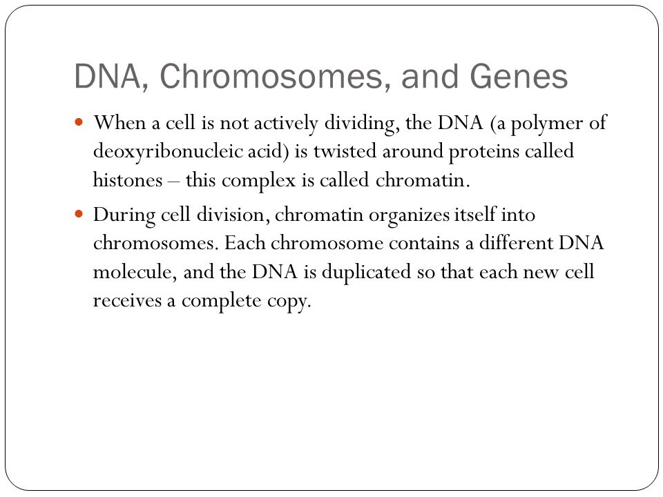 DNA, Chromosomes, and Genes