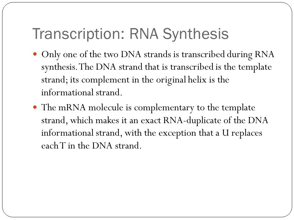 Transcription: RNA Synthesis